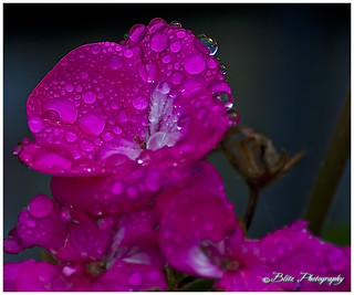 After The Rain | by Blitz Photography & Production