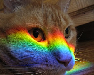 Rainbow Cat | by J_smash