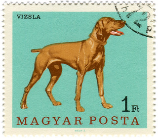 Hungary postage stamp: vizsla dog | by karen horton