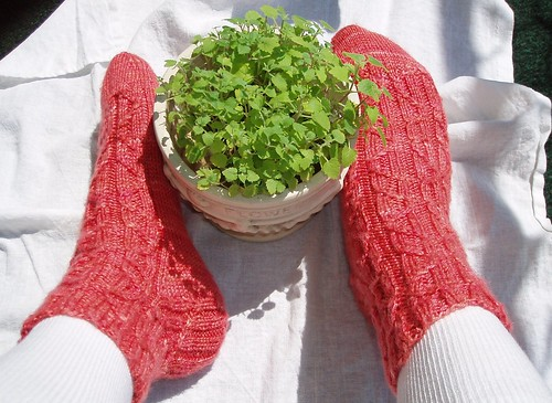 Fata Morgana Summer Socks w/catnip | by Olivia23-Knits