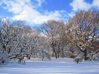 Jan 27 Winter Storm | by Brooklyn Botanic Garden