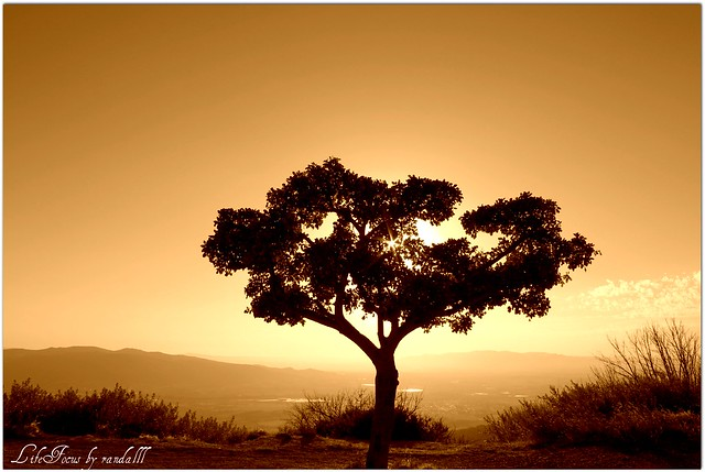 sunset silhouette in sepia