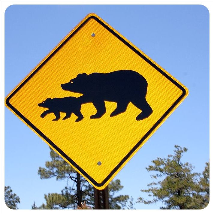 Mount Lemmon bear warning