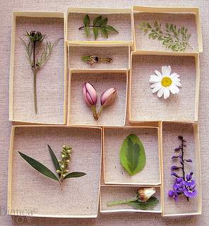 little specimens on linen | by Bianca Snow