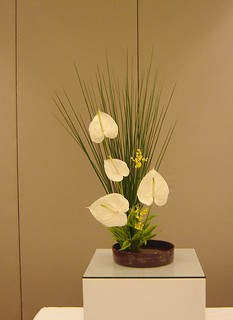 White anthurium and juncus | by Ligia Miranda