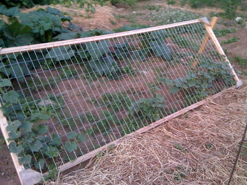 cucumber trellis | by Sweet Local Farm