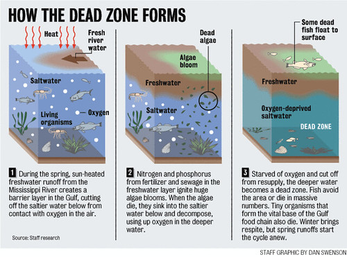 Formation of the Gulf of Mexico Dead Zone | by eutrophication&hypoxia