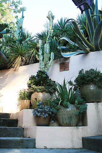 Awkward spot that was made for accent succulents and pots | by anniesannuals