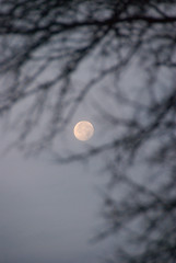 The Moon thru the Winter Tree