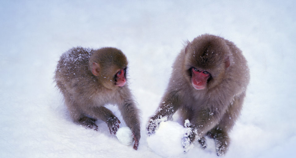 SnowMonkeys