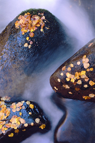 """Leaves, Rocks and Stream"" by Sam Roberts 