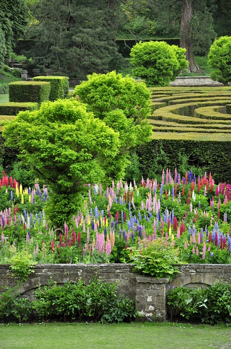 A maze and a lupin garden at chatsworth this part of for Garden design derbyshire