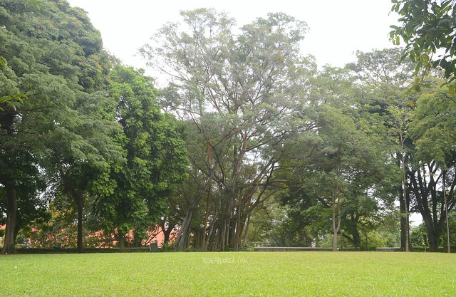 singapore's museum district fort canning park
