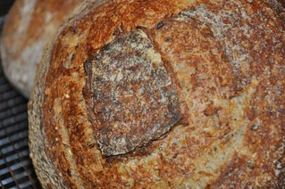 Five Grain Levain | by Sjadad