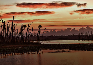 Orlando Wetlands Sunrise | by Steve Russell Photography