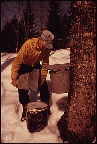THIS DAIRY FARMER NEAR RANDOLPH CENTER, VERMONT, AVERAGES ABOUT 400 GALLONS OF MAPLE SYRUP EACH SPRING. THIRTY TO 40 GALLONS OF SAP ARE NEEDED TO MAKE ONE GALLON OF SYRUP, 04/1974 | by The U.S. National Archives