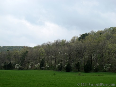 The front field with more blooming dogwoods than we've ever seen | by Farmgirl Susan