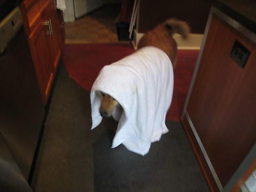 soggy doggie