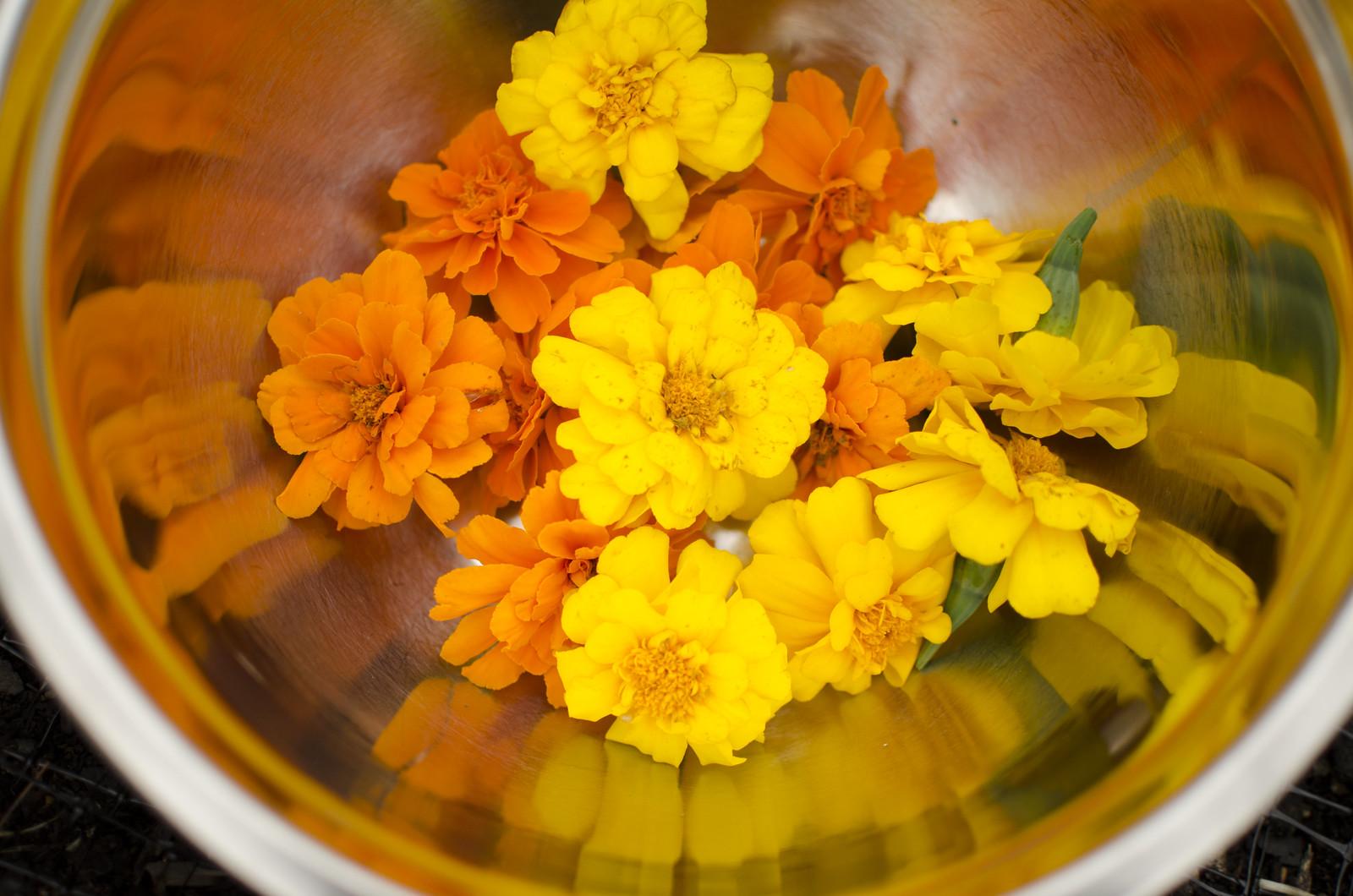 marigold dye 3