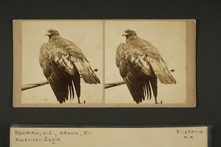 American Eagle | by George Eastman House
