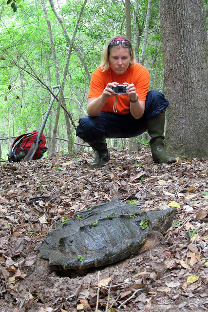 Misti w- alligator snapping turtle