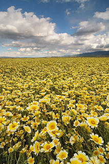 Field of Dreams - Carrizo Plain National Monument | by Joshua Cripps