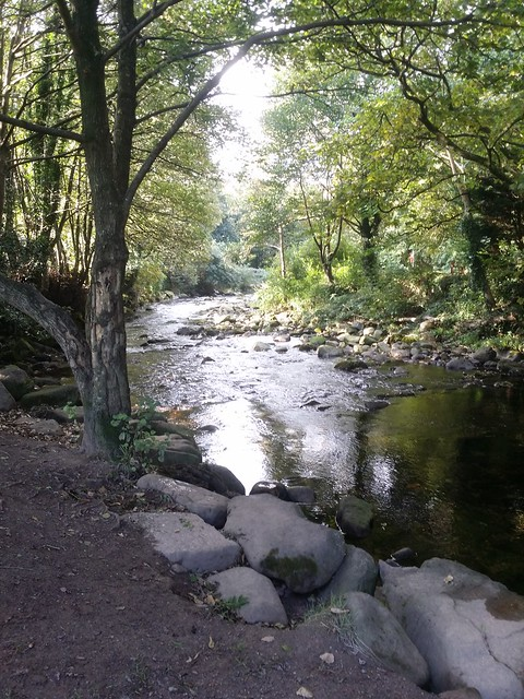 Day 8: River Erme