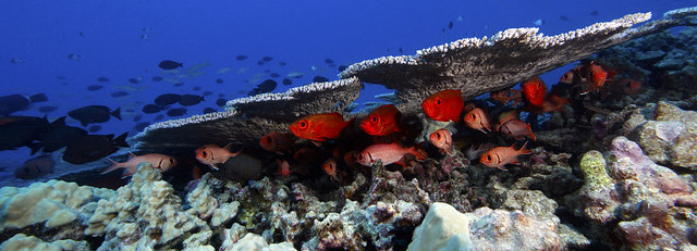 Fishes and Coral at Rapture Reef