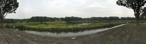 Panorama View of Waterfowl lake, Showa Memorial Park, Tokyo, Japan