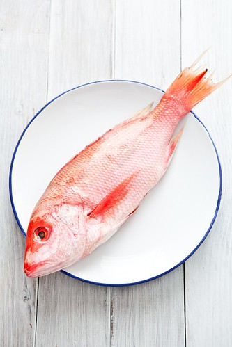 Red Snapper | by tartelette