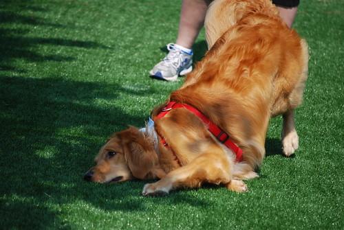 Newtown Dream Dog Park Usa