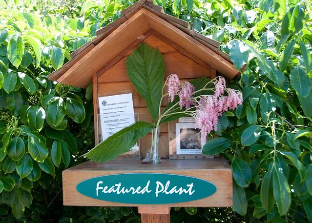 UBC Botanical Garden-14