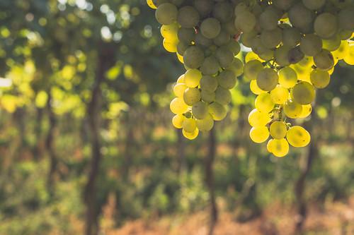 Im Weingarten 5