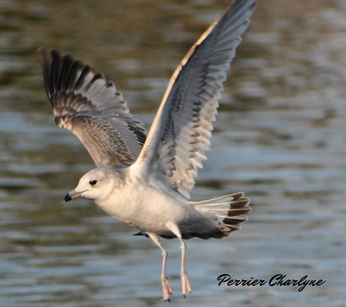 mouette | by charlyne perrier
