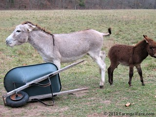 Daphne Doesn't Like to Share | by Farmgirl Susan
