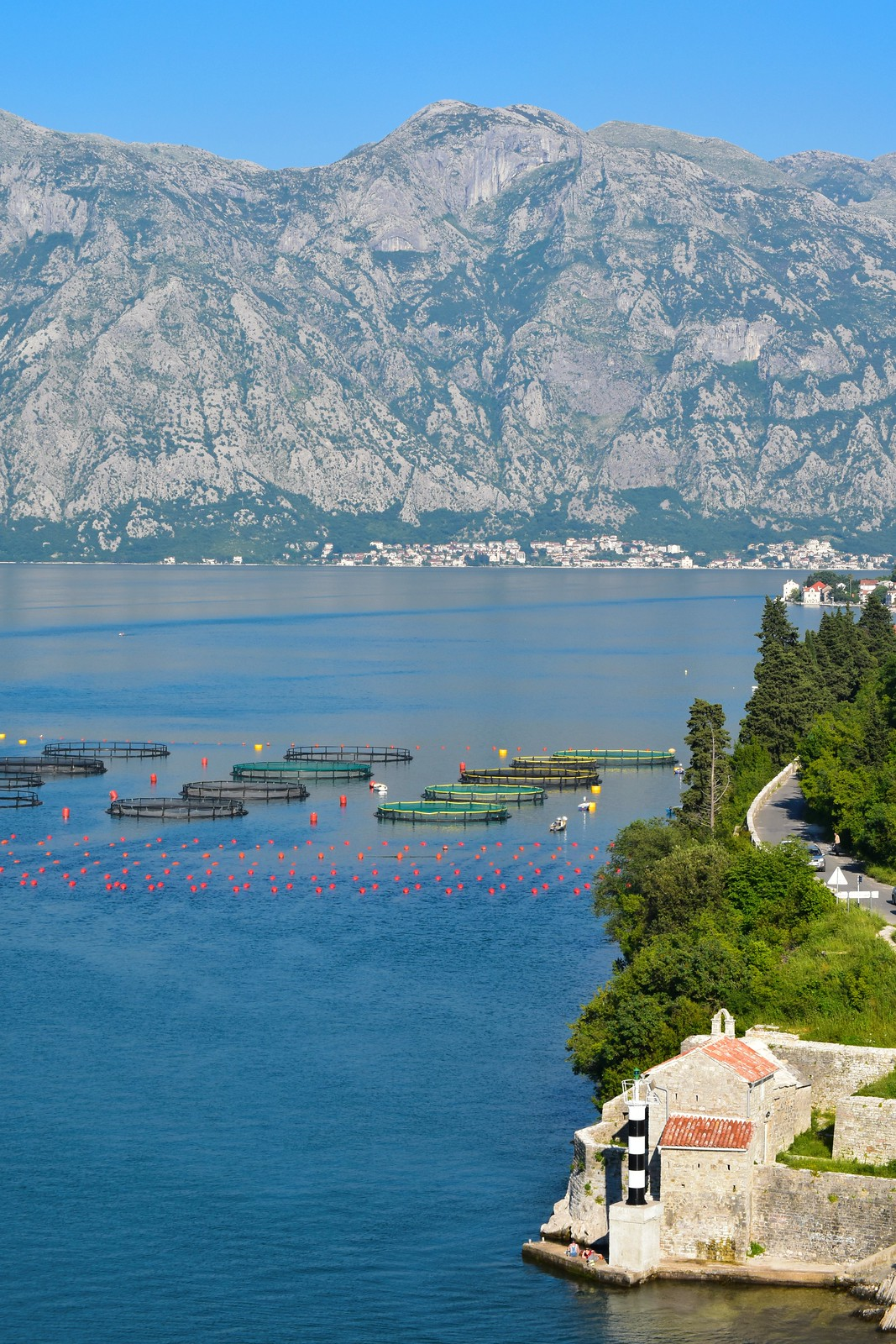 Kotor Bay fish farm