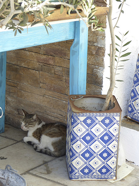 chat sous un olivier