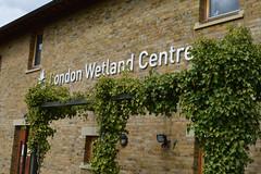 Парк Ветланд. London Wetland Centre