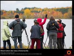 Observation des oies à Victoriaville
