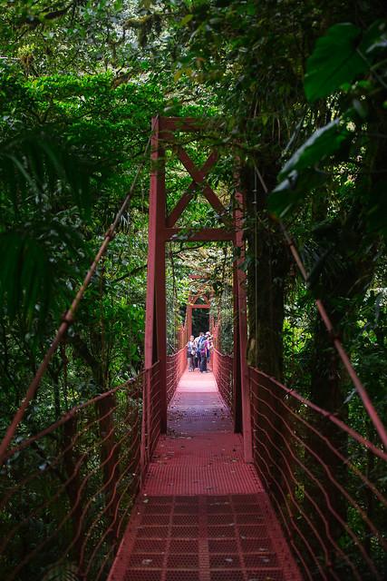 161113_REE_Monteverde_Reserve_164