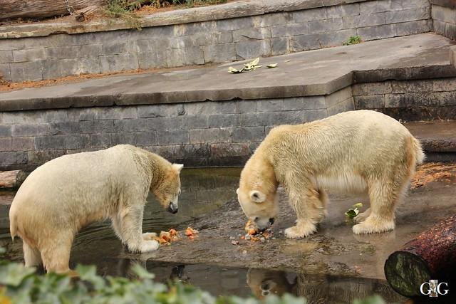 Zoo Rostock 02.10.2016108