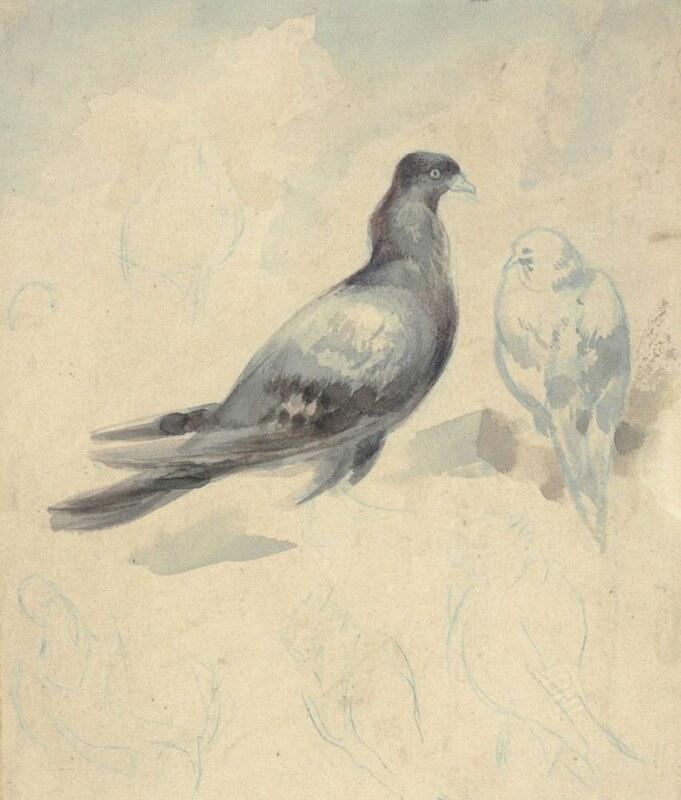Dessin de pigeon de Cyprian Norwid