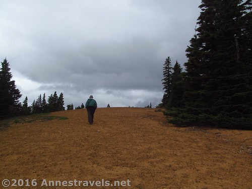 Ascending Red Hill (note the yellow cinders), Mount Hood National Forest, Oregon