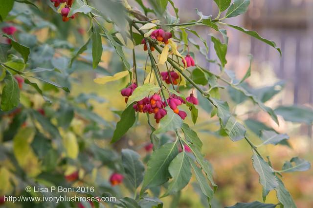 2016.10.31-Garden03