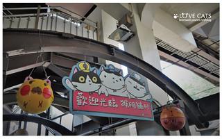 侯硐貓村-9