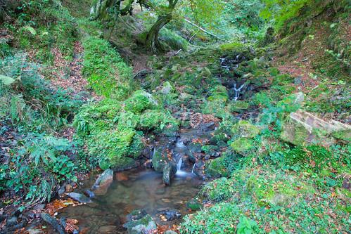 Parque Natural de #Gorbeia #DePaseoConLarri #Flickr      -1328
