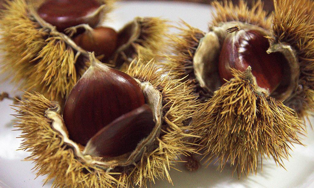 Frutos de otoño: las castañas