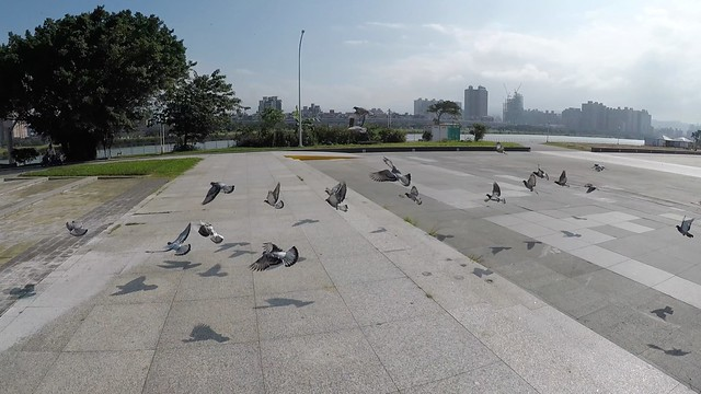 馬場町鴿子