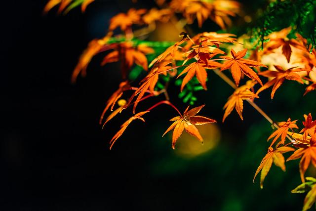 Kyoto_Eikando_01