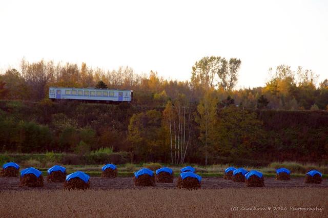 豆ニオがある夕照の鉄道風景2
